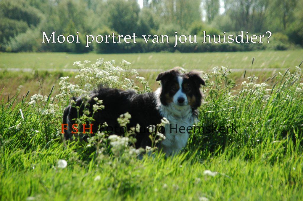 Dierenfotografie_Fotostudio Heemskerk
